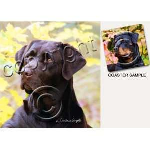 Labrador Retriever Dog Drink Coasters   Chocolate