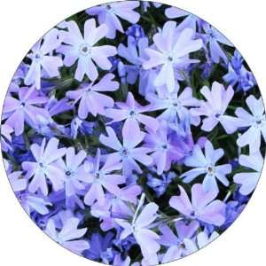com Blue Flowers Art   Fridge Magnet   Fibreglass reinforced plastic